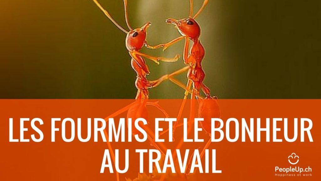 les-fourmis-et-le-bonheur-au-travail-florian-amstutz